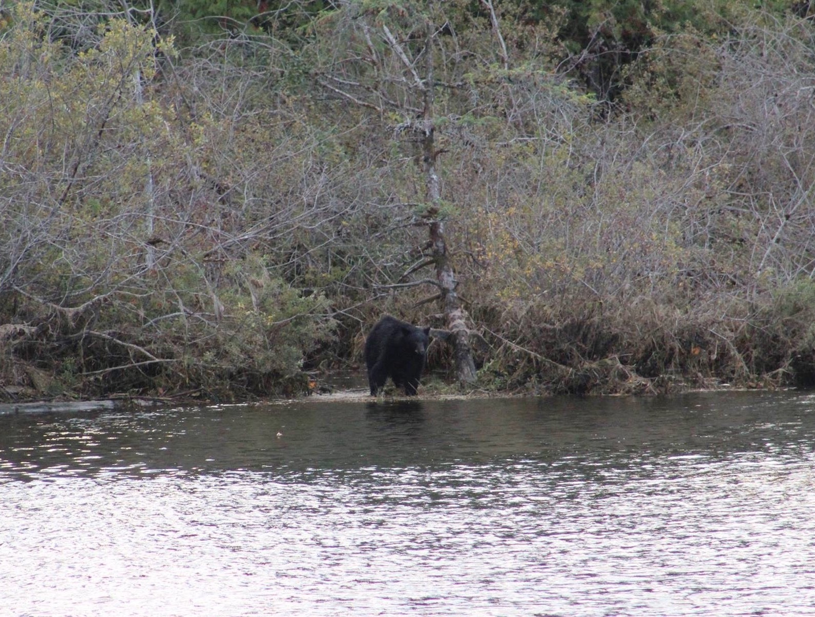 I saw bears - how amazing is that? // photo by Kaelin.