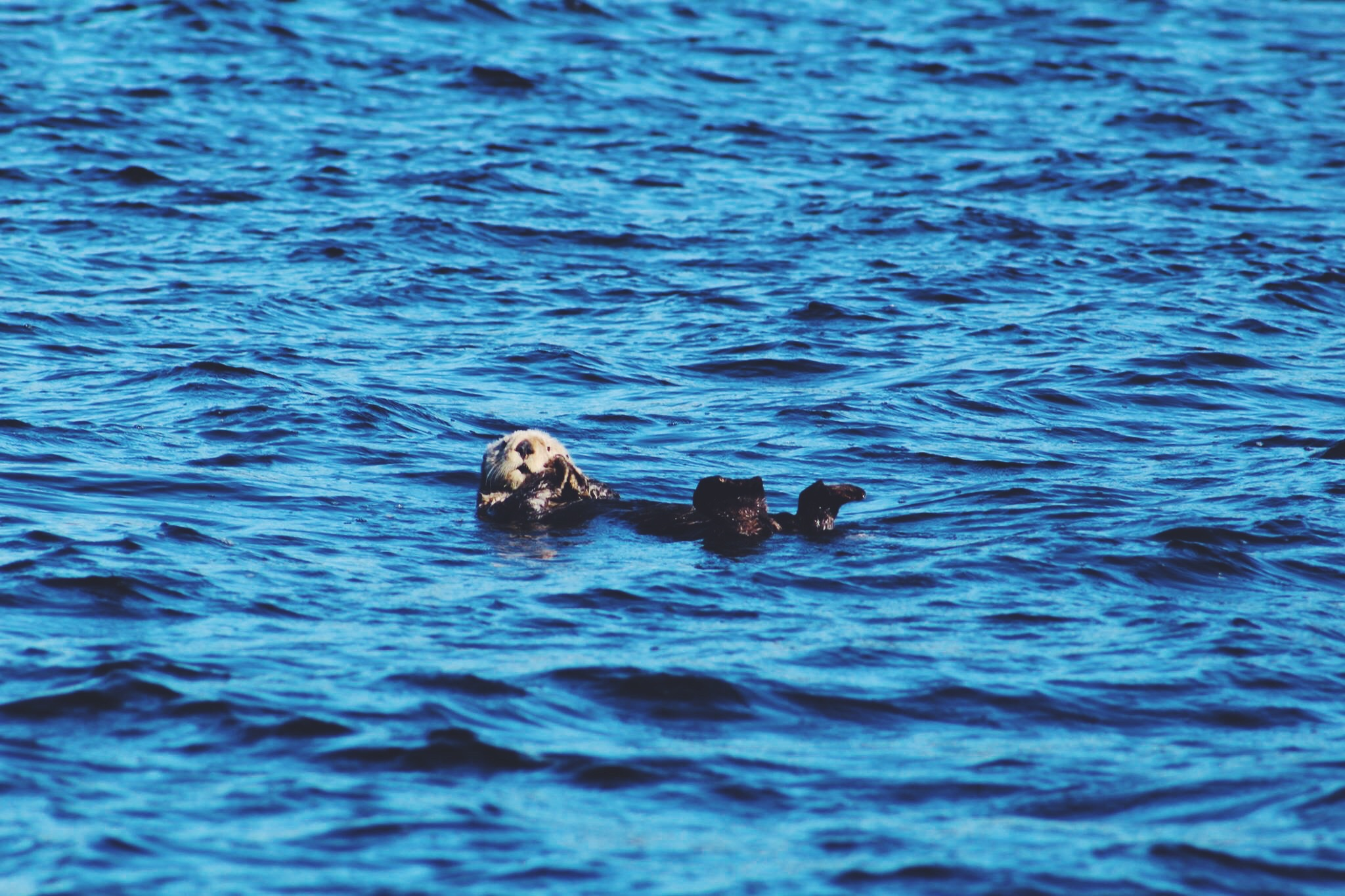 ...and otters // photo by Kaelin.